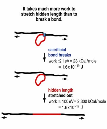 Simplified demonstration of why it is harder to break molecules that contain sacrificial bonds and hidden length. This type of molecule is active in bone glue, and its presence helps explain why that glue makes bone so tough.